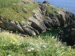paysages bretons  dans broderie p60404472-150x112